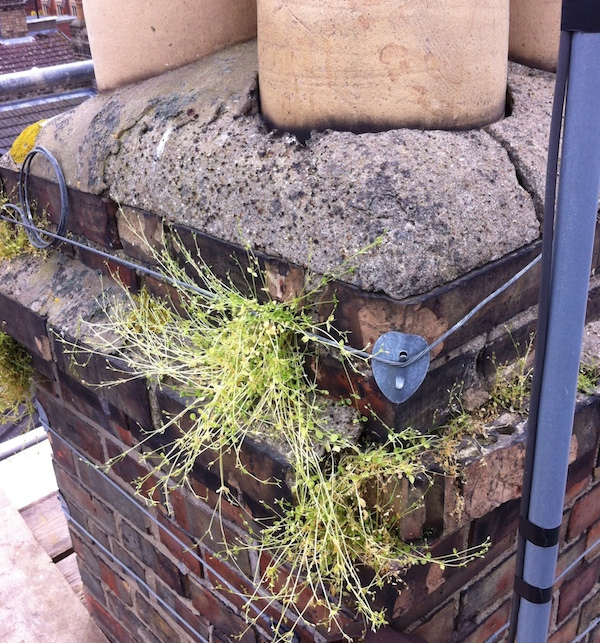 Vegetation and damage to Victorian chimney